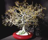 Yellow Oak - Wire Tree Sculpture