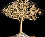 Golden Elm - Wire Tree Sculpture