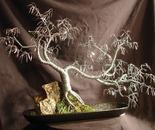 Cascade No.3  Wire Tree Sculpture