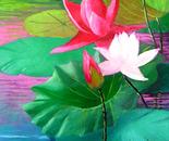 lotus solo