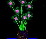 ' Dark Vase at Night'