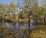 Lignum & River Cooba Wetlands