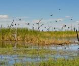 Classic Gwydir Wetlands