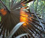 Palm Frond and Sunlight