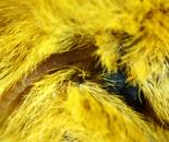 Moth Eye