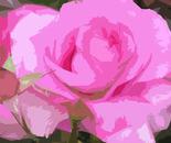 la rosa_1