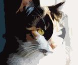la gatta_Mina