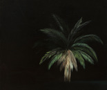 palm at night 2