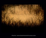 Dry Grass 1dg