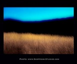 Dry Grass 104dg