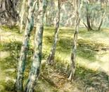 Vila Berna Forest