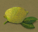 "citron ""lemon"""