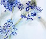 Brisas Azules