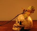 vanitas skull and oak leaf