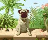 Pug in Spiderland