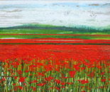 Wild poppies Redesdale no5