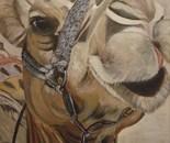 kameel acryl 40 x 50 cm