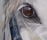 paardenoog acryl 30 x 40 cm