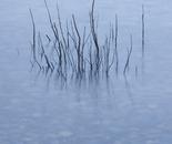 Twigs #15