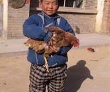 My Chicken, Yulin China