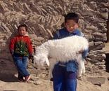 Yulin sheepherder