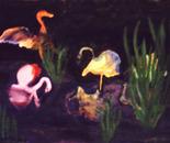 Flamingos At Night.