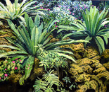 Birds Nest Ferns