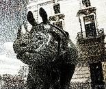 mino rhino