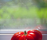 Heirloom tomato, Libertyville, Illionis