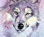 Wolf Splash