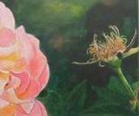 Rose Frulinsduff