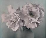 Rose in Green Vase