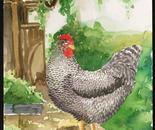 Houndstooth Hen