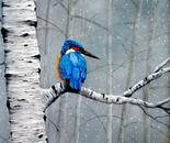 Kingfisher Alert