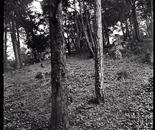 Parc de Buttes Chaumont