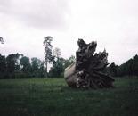 Marie Antoinette's Oak