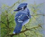 blue jay one