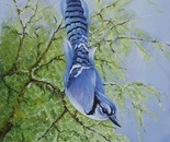 blue jay two