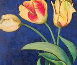 Bird of Paradise Tulips