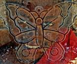 Haiti Butterfly