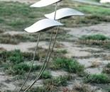 Wind stamens