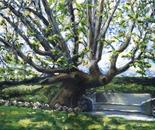 Adamson Home Tree