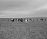 Coney Island Fellini