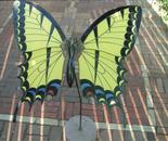 large Swallowtail