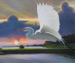 Great White Egret at Sunrise