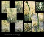 Ayhan Mutlu nature preserve with nature