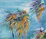 Chapala Wind