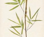 Bamboo 2
