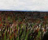 Wheat Series