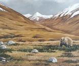Daosai plains, Brown bear